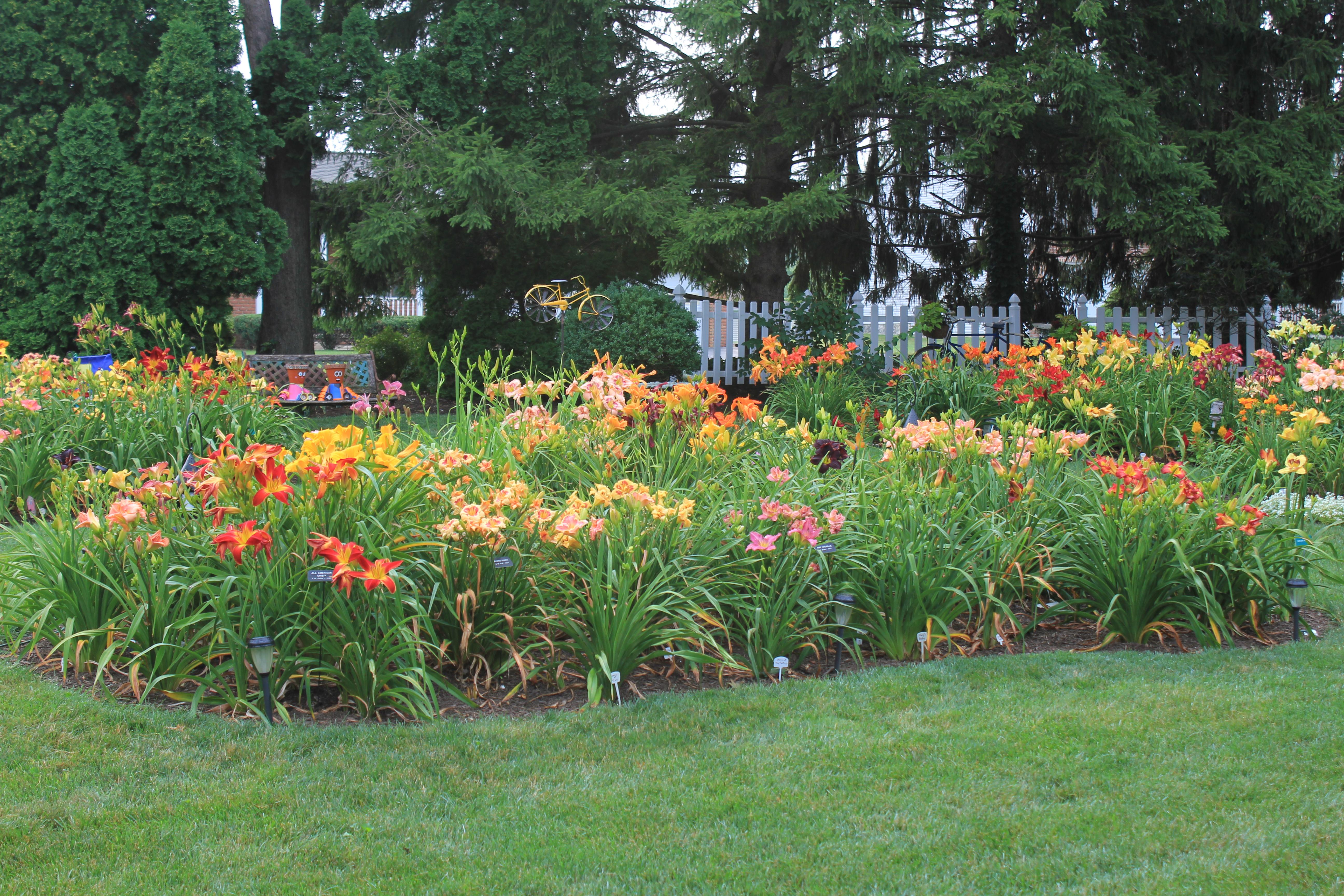 Exceptional Julyu0027s Peak Bloom In The Garden