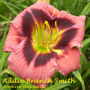 Addie Branch Smith