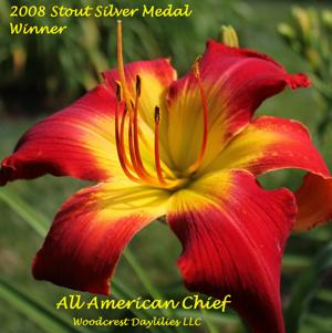 All American Chief - 2008 Stout Silver Medal Winner