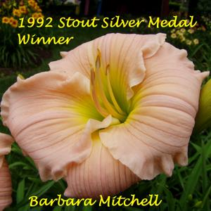 Barbara Mitchell - 1992 Stout Silver Medal Winner