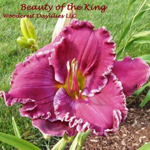 Beauty of the King