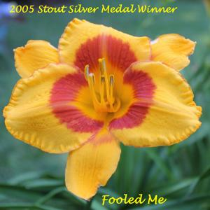 Fooled Me - 2005 Stout Silver Medal Winner