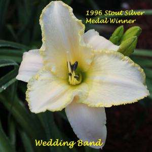 Wedding Band - 1996 Stout Silver Medal Winner