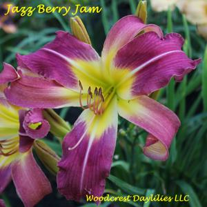 Jazz Berry Jam