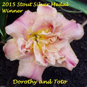Dorothy and Toto - 2015 Stout Silver Medal Winner