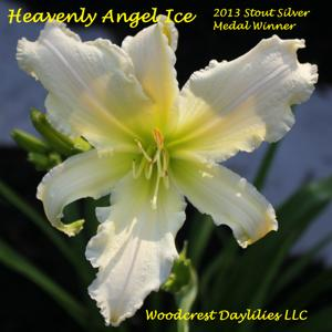 Heavenly Angel Ice - 2013 Stout Silver Medal Winner