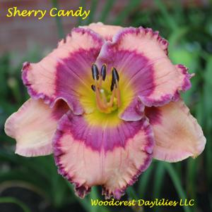 Sherry Candy