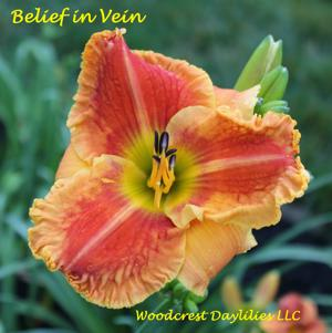 Belief in Vein
