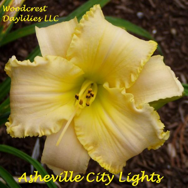 Asheville_City_Lights