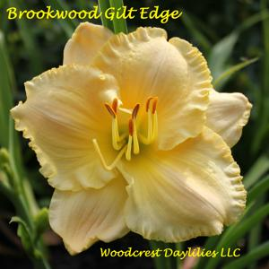 Brookwood Gilt Edge